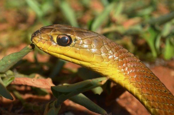snakes in the kampala snake park